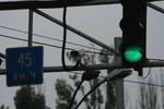 снимка на изработка на преносими светофари
